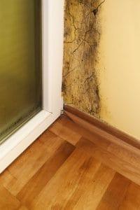 Ako odstrániť pleseň na stenách v byte navždy Bratislava