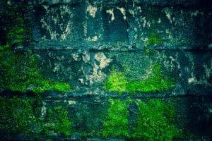Plesně, mykózy a iné potvory Bratislava