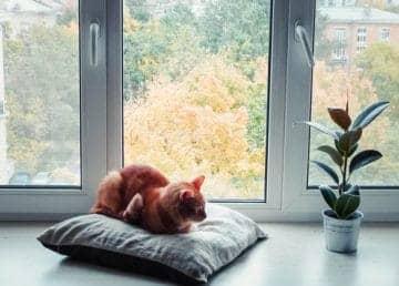 Okna, ceník mytí