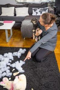 čistenie kobercov po psoch NItra