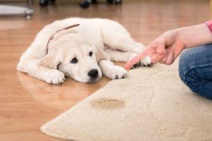 čistenie kobercov od psích exkrementov NItra