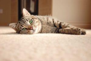 Kdo mi vyčistí koberec