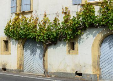 fasády a plísně